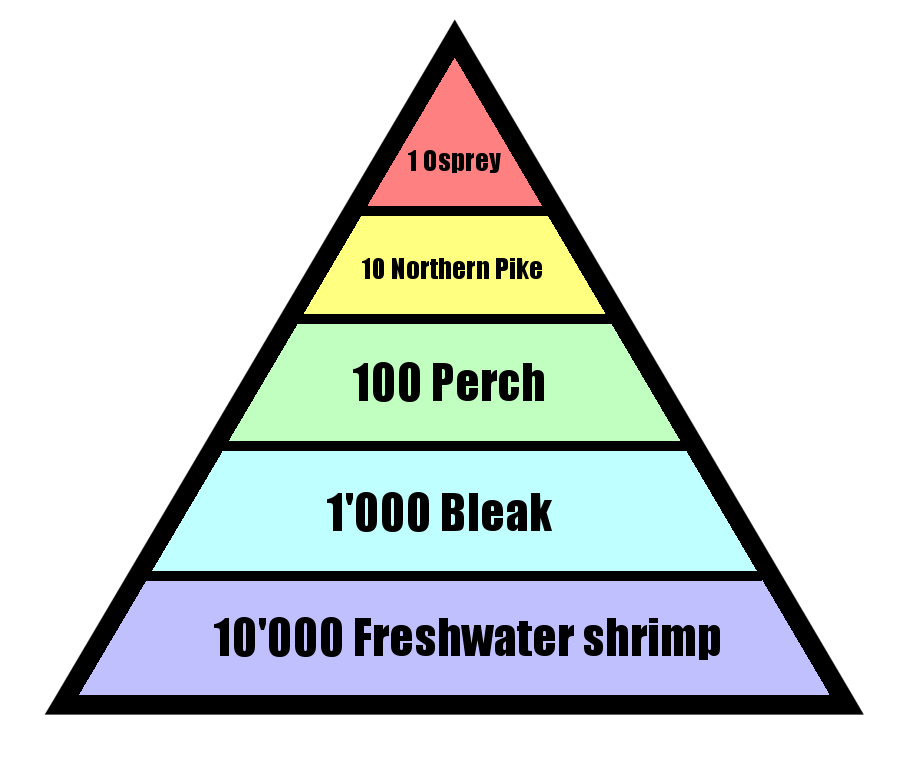 File:Pyramid of numbers.png - Wikipedia