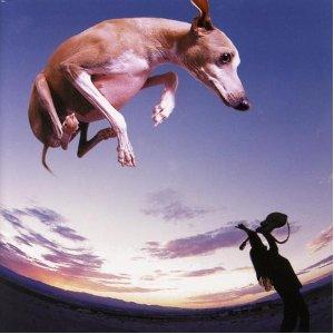 <i>Flying Dog</i> 1998 studio album by Paul Gilbert