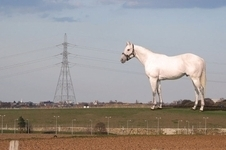 White Horse at Ebbsfleet sculpture by Mark Wallinger