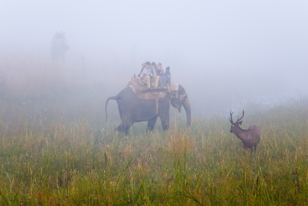 Early-morning encounter with a Sambar deer in Jim Corbett National Park, on a guided elephant tour from the Dhikala tourist lodge.