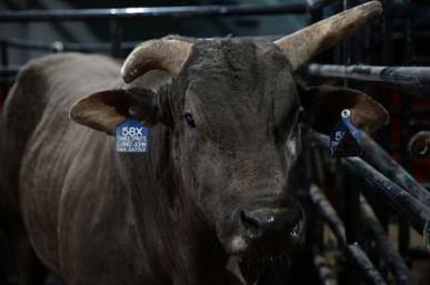 long john bull wikipedia