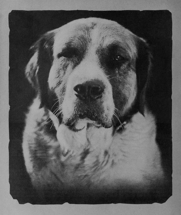 a dog named buck in the novel call of the wild by jack london Amazoncom: the call of the wild (9781629100111): jack london: books   buck, who is shipped to the klondike to be trained as a sled dog, eventually  reverts to his primitive  it would be best called a comic book version of call of  the wild.