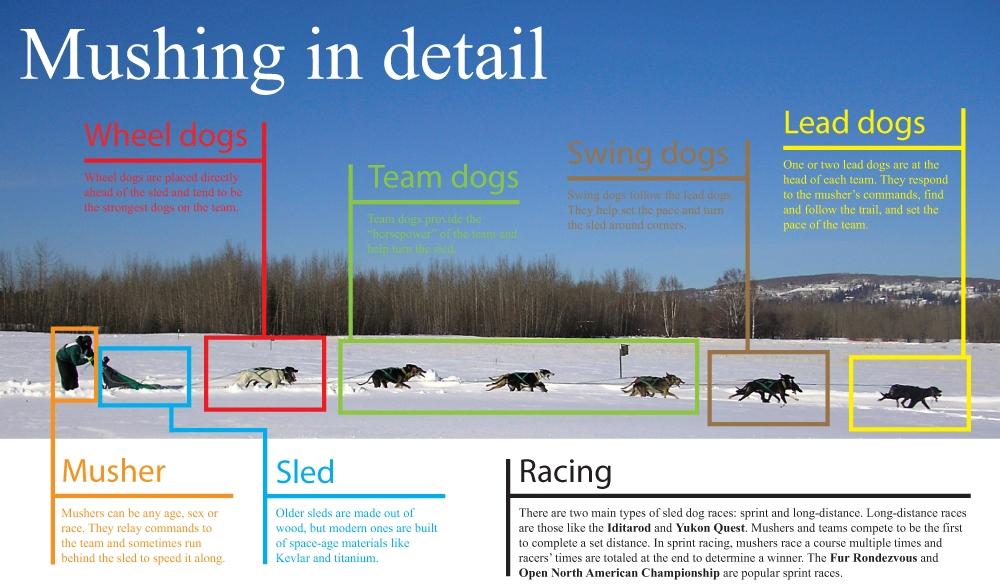 Dog Sled Team Postions...