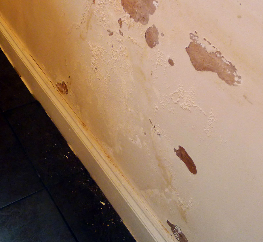 Damp wall repair tapp me