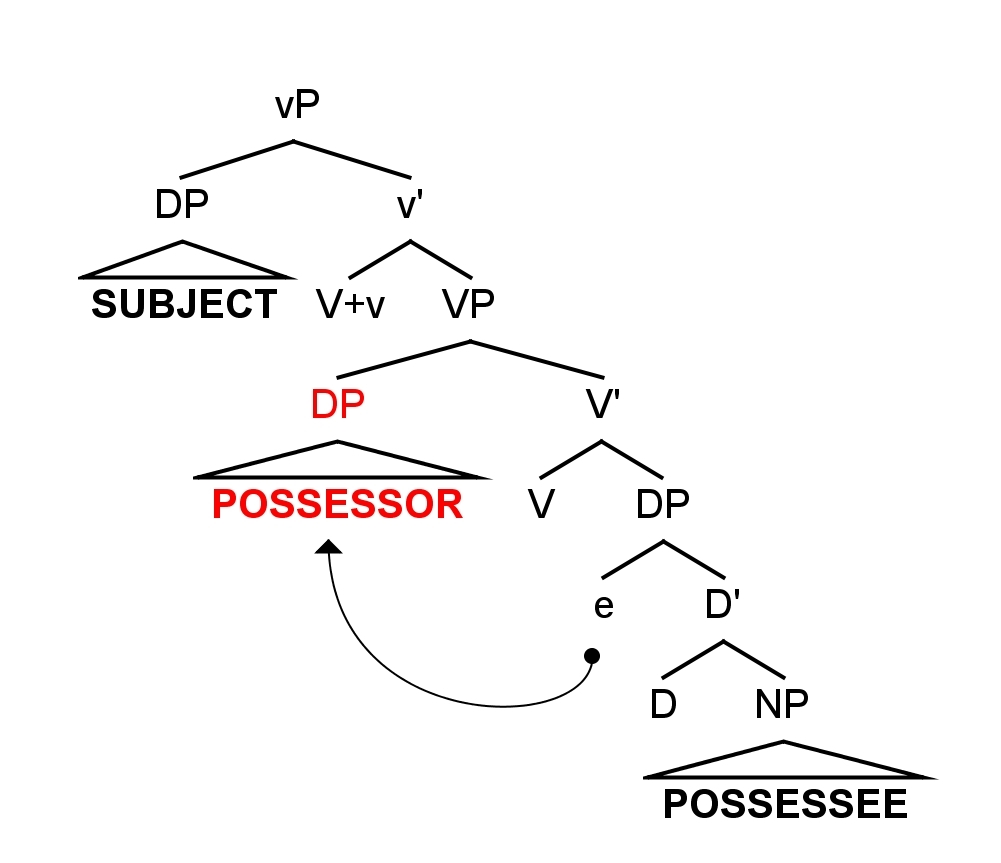 Internal external possessors