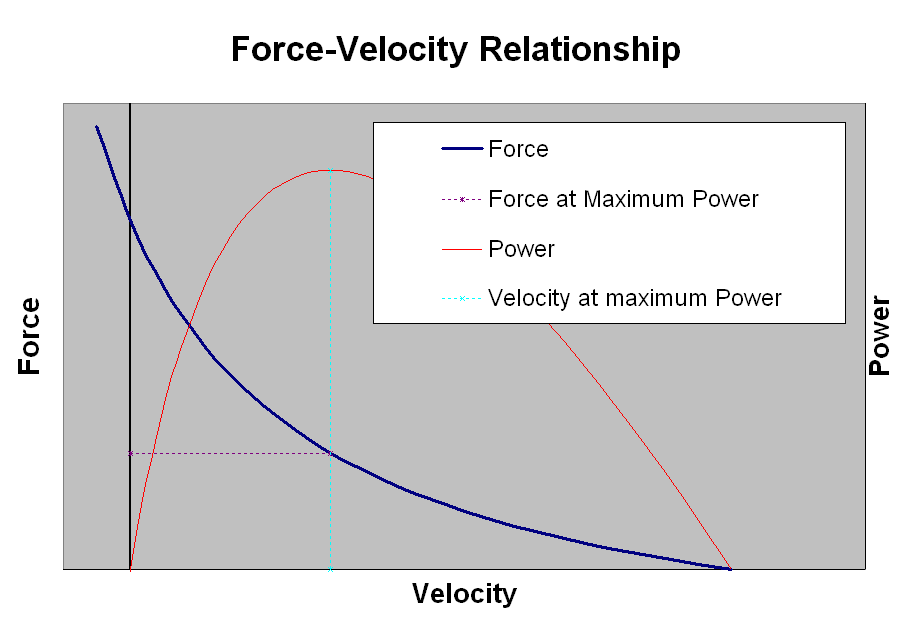 Filemuscle force velocity relationshipg wikipedia 1752 7 january 2011 ccuart Images