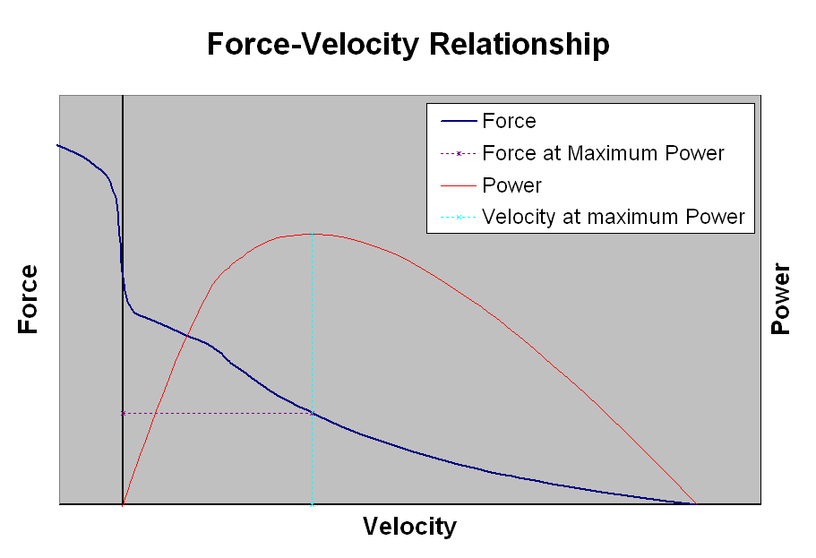 aging and the force velocity relationship of