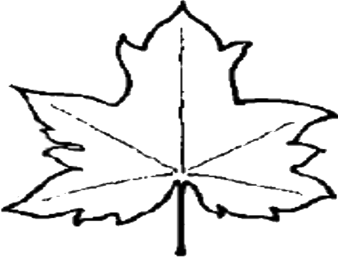 maple leaf outline template .