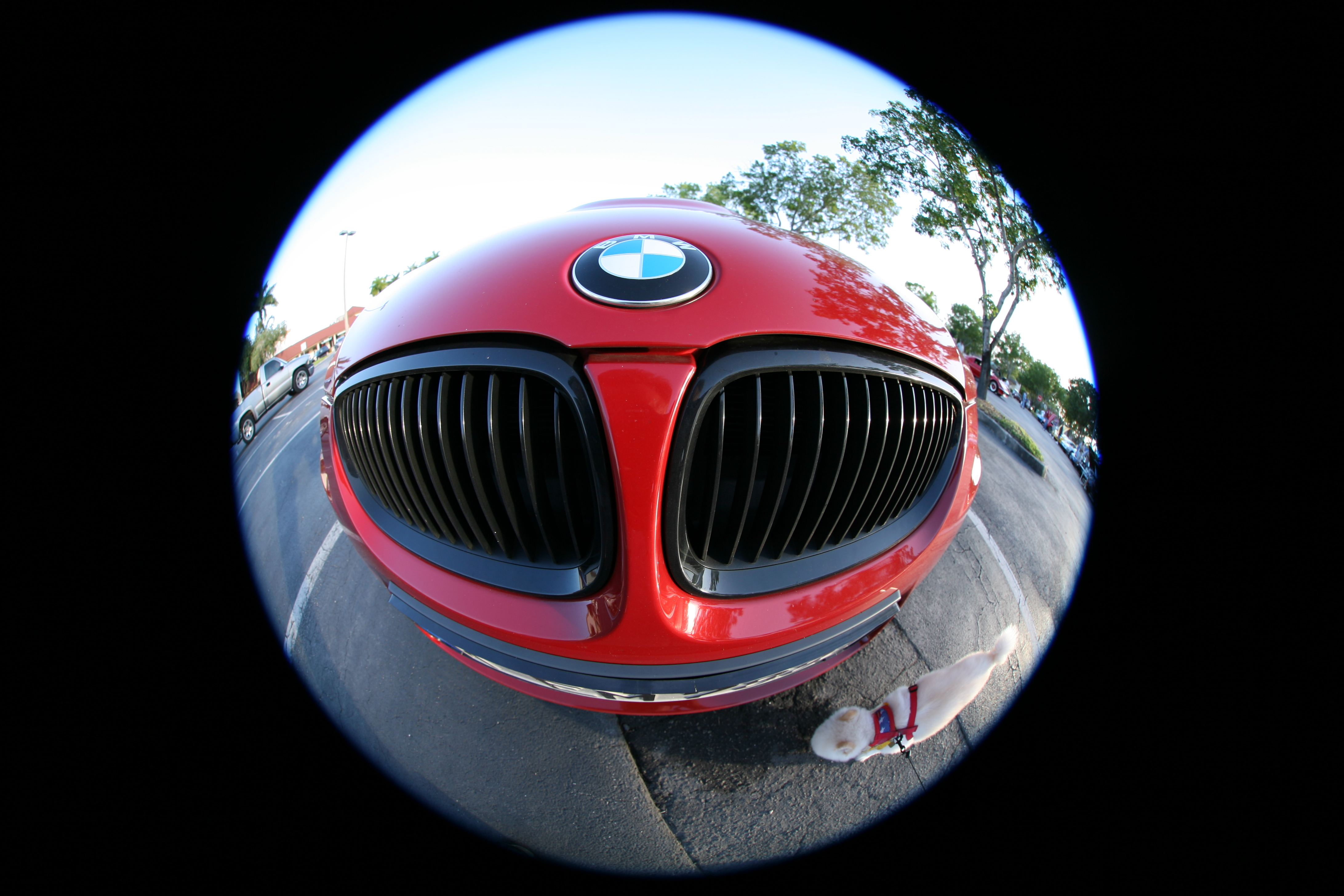 Car Has Fisheye After Painting Lexus