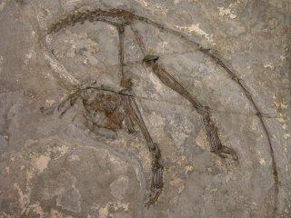 El primate más antiguo