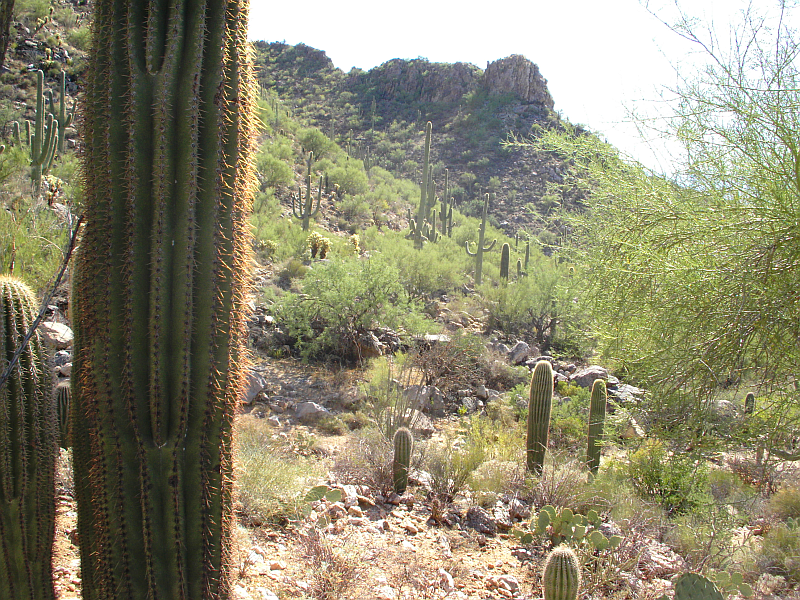 Oro Valley, Arizona - Wikipedia, the free encyclopedia
