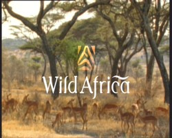 Wild Africa title card