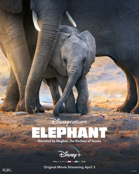 Elephant (2020 film) - Wikipedia