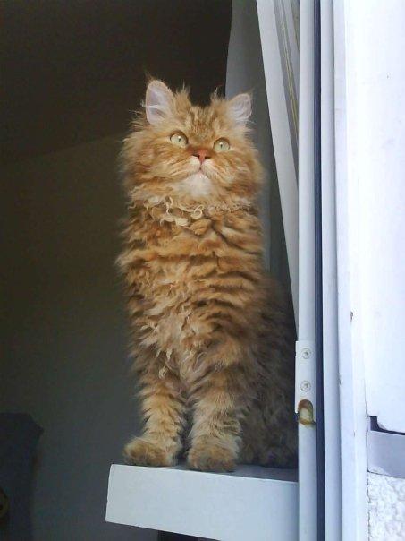 List of cat breeds