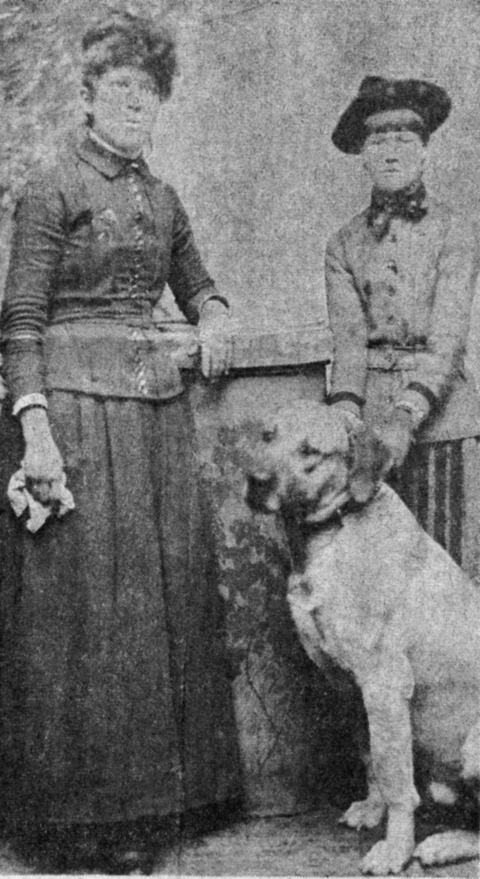 Animal Welfare League Springfield Ohio Adoptable Dogs
