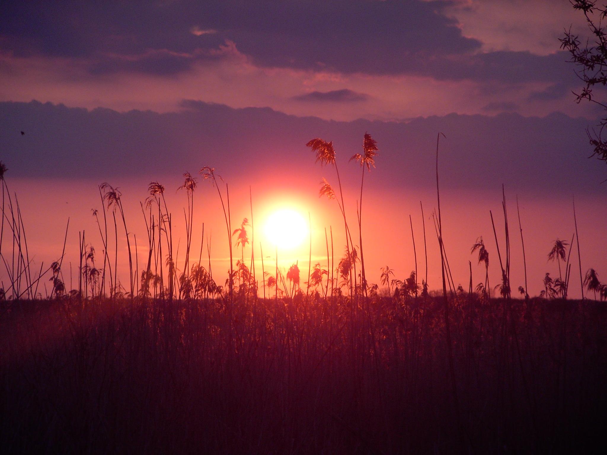 File:Long Point Sunset.jpg - Wikipedia   title   sunset in november