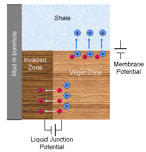 Fig1: Electrochemical Potential: Liquid junction & membrane potential SP MembraneAndLiquidJunctionPotential, small.png
