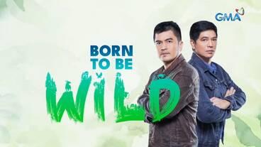 Born To Be Wild Tv Series Wikipedia
