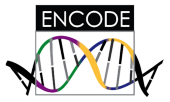 ENCODE research consortium investigating functional elements in human and model organism DNA