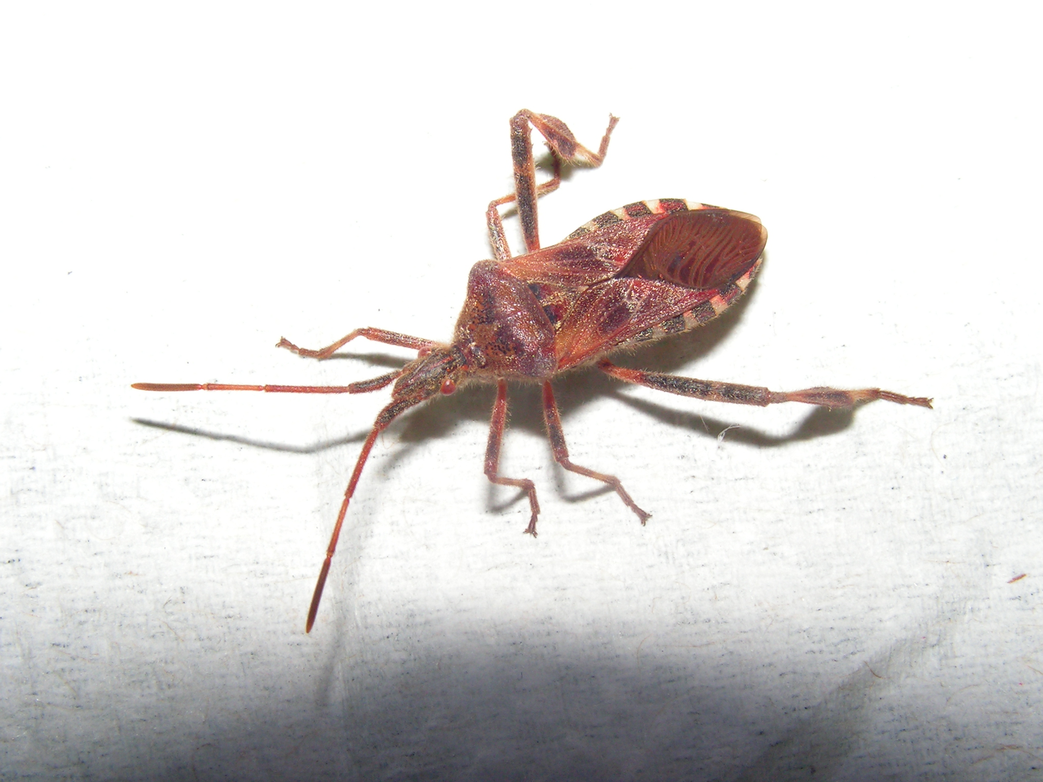 So What bug is this? | BladeForums.com
