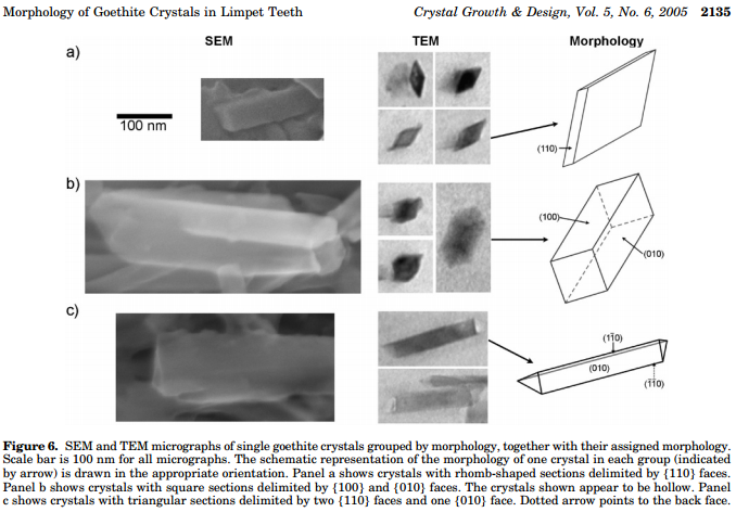 limpet wikipediasem and tem images of the morphologies of goethite in limpet teeth different goethite morphologies result from limiting growth in certain crystal planes