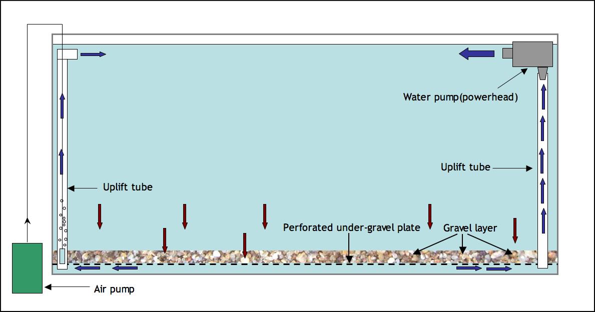 Help with undergravel filter setup for Best pond filter setup