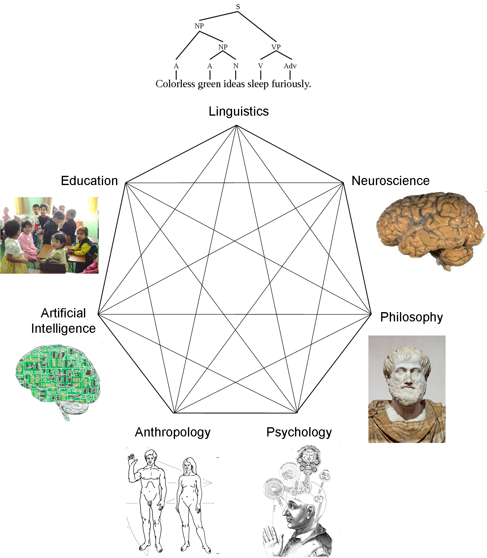the contribution of cognitive psychology to the scientific study of behavior Psychology: psychology, scientific discipline that studies mental states and processes and behavior in humans and other  the study of religious psychology involves both the gathering and classification of data and the.
