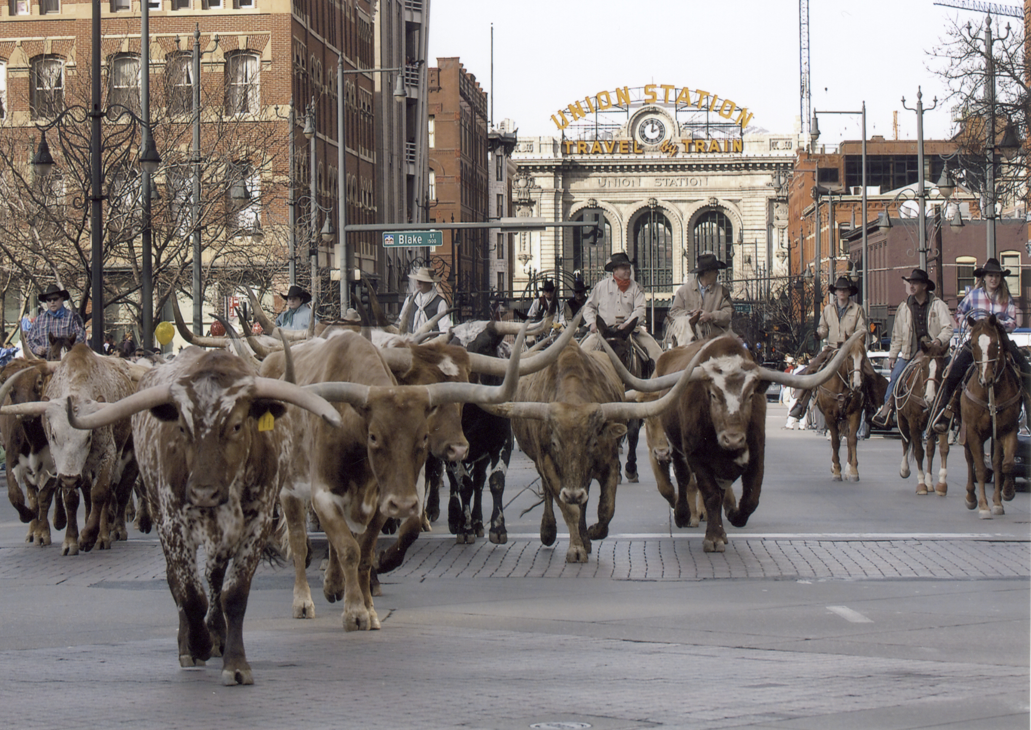 National Western Stock Show Parade - 17th Street, Downtown Denver, Colorado