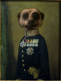 Compare The Meerkat Wikipedia
