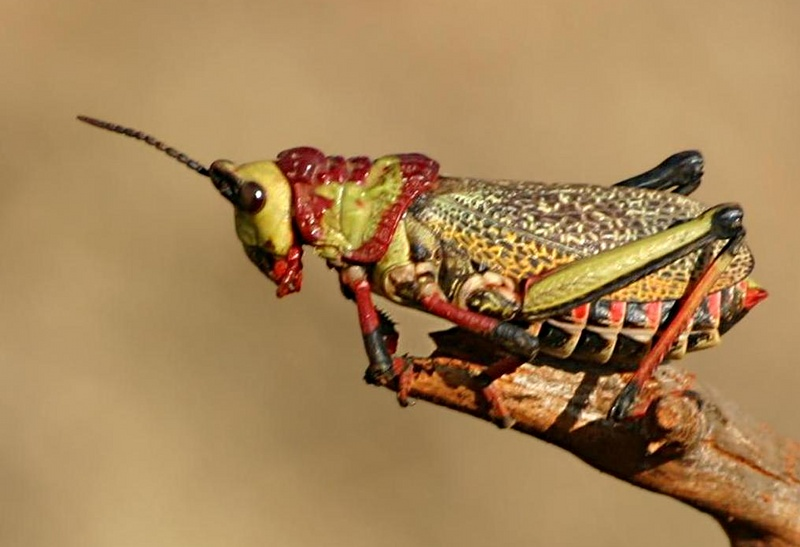 Image Result For Colorful Insects