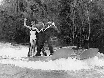 Queenie elephant  Wikipedia