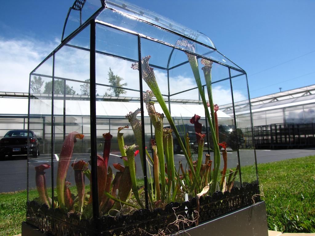 File Carnivorous Plant Terrarium Jpg Wikipedia