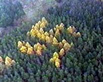 Image result for swastika forest