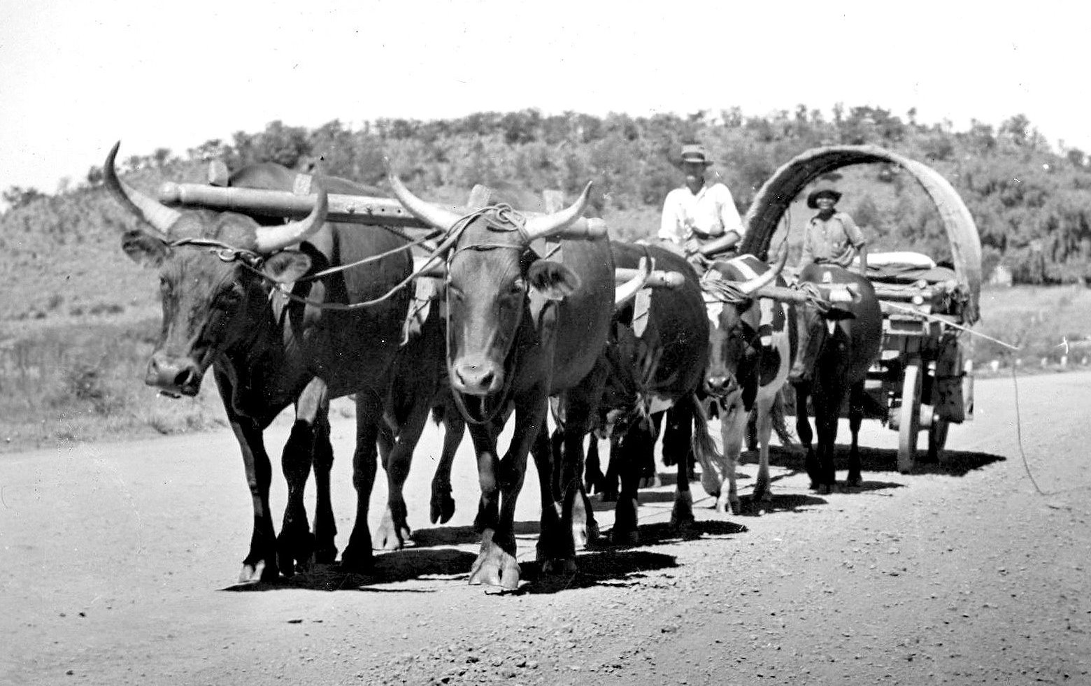 Image result for Ox Wagon