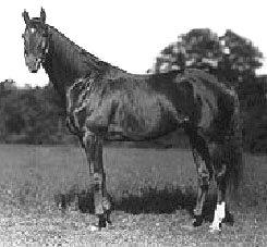 Whisk Broom II American-bred Thoroughbred racehorse