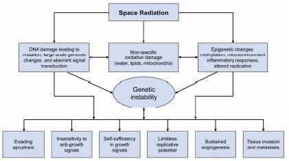 Fileradiation carcinogenesis figure 4 8g wikipedia fileradiation carcinogenesis figure 4 8g ccuart Choice Image