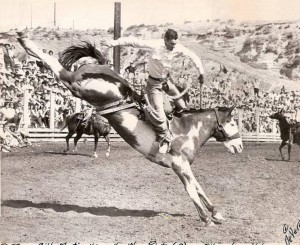 Saddle bronc riding horse