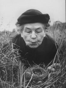 Margaret Morse Nice ornithologist