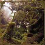 <i>Beyond the Glimpse of Dreams</i> 1998 studio album by Kekal