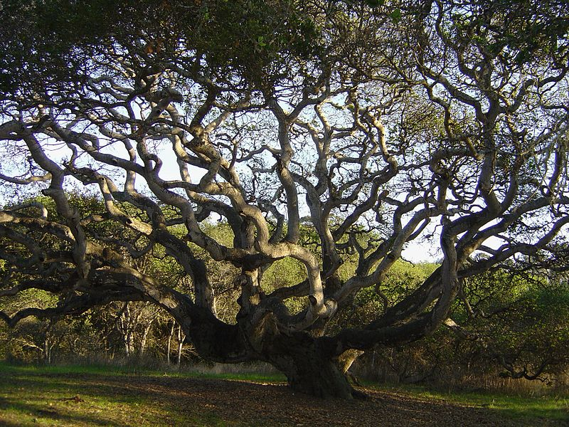 Live Oak, California