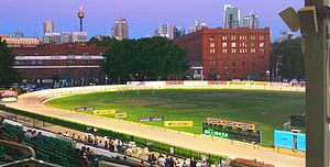 Greyhound racing in Australia - The 2014 Golden Easter Egg at Wentworth Park.