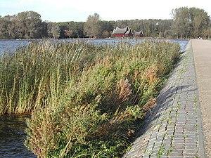 Kralingen-Crooswijk - Kralingse Bos