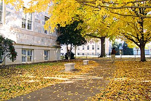 Emory in autumn