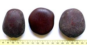 Entada rheedii - Image: Entada rheedii seeds picked up on a South African beach at Mapelane