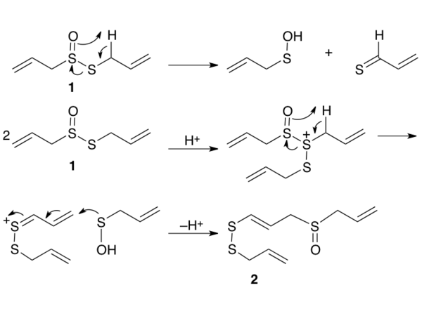 Mechanism for formation of ajoene from allicin.tiff