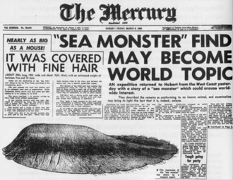 Tasmanian Globster - March 9, 1962 issue of The Mercury covering the Tasmanian Globster.