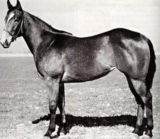 Chicado V Quarter Horse champion race mare