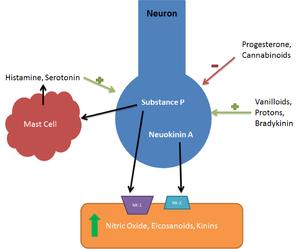 Neurokinin A - Image: Neurokinin Inflamation Pathway