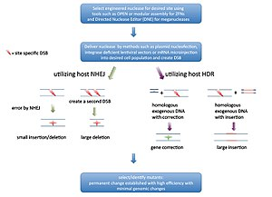 Genome editing - Overview of GEEN workflow and editing possibilities