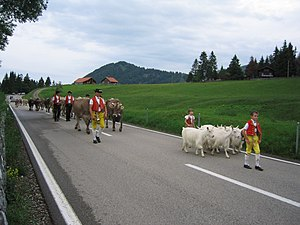Alpine transhumance - bringing livestock to summer pasture, Schwägalp (Jun 2004)